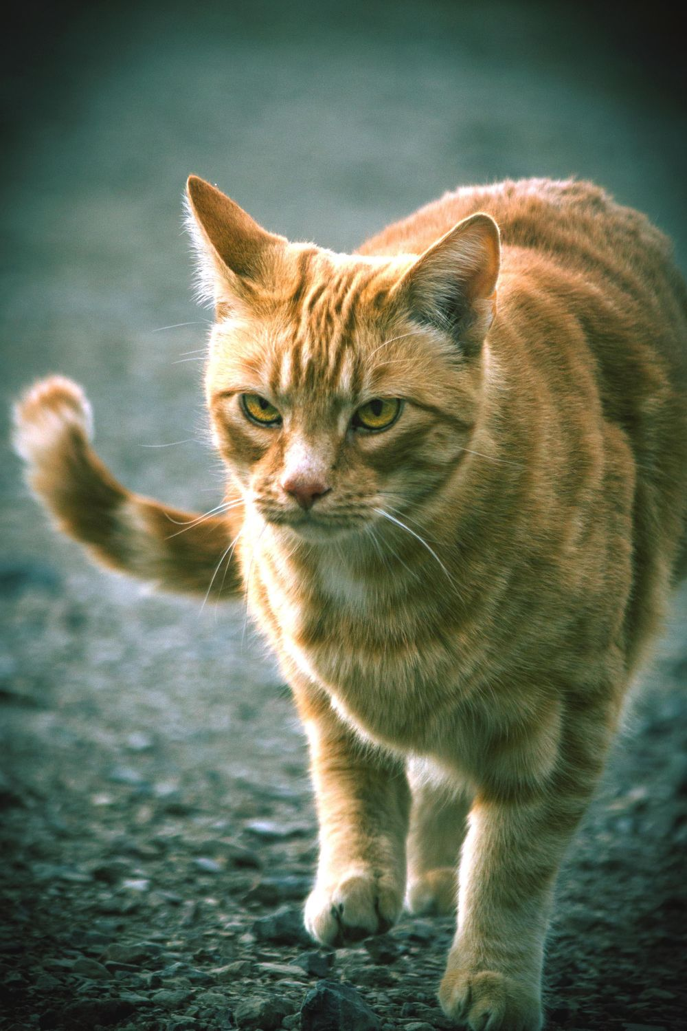 Color Grading Cats - image 5 - student project