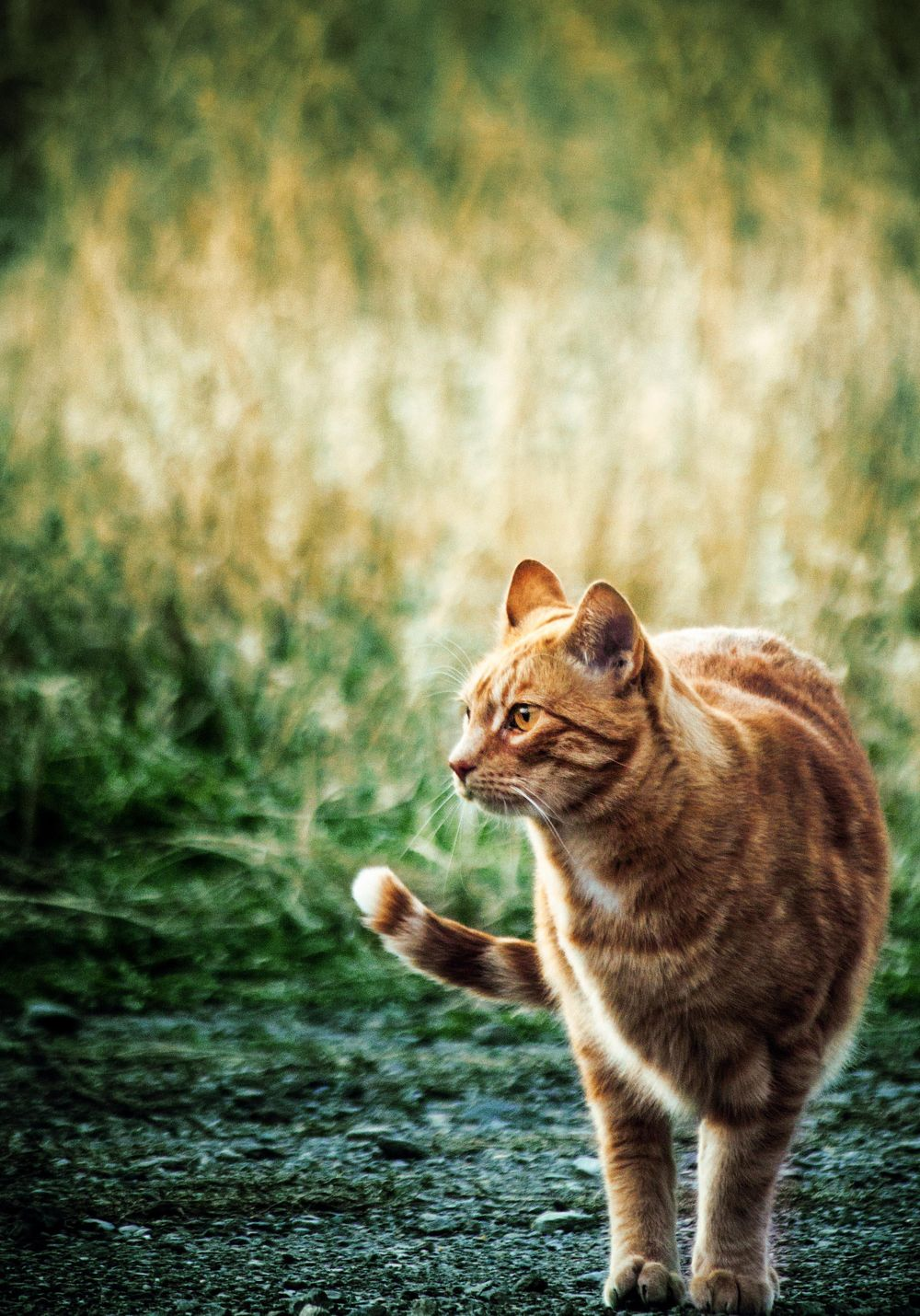 Color Grading Cats - image 3 - student project
