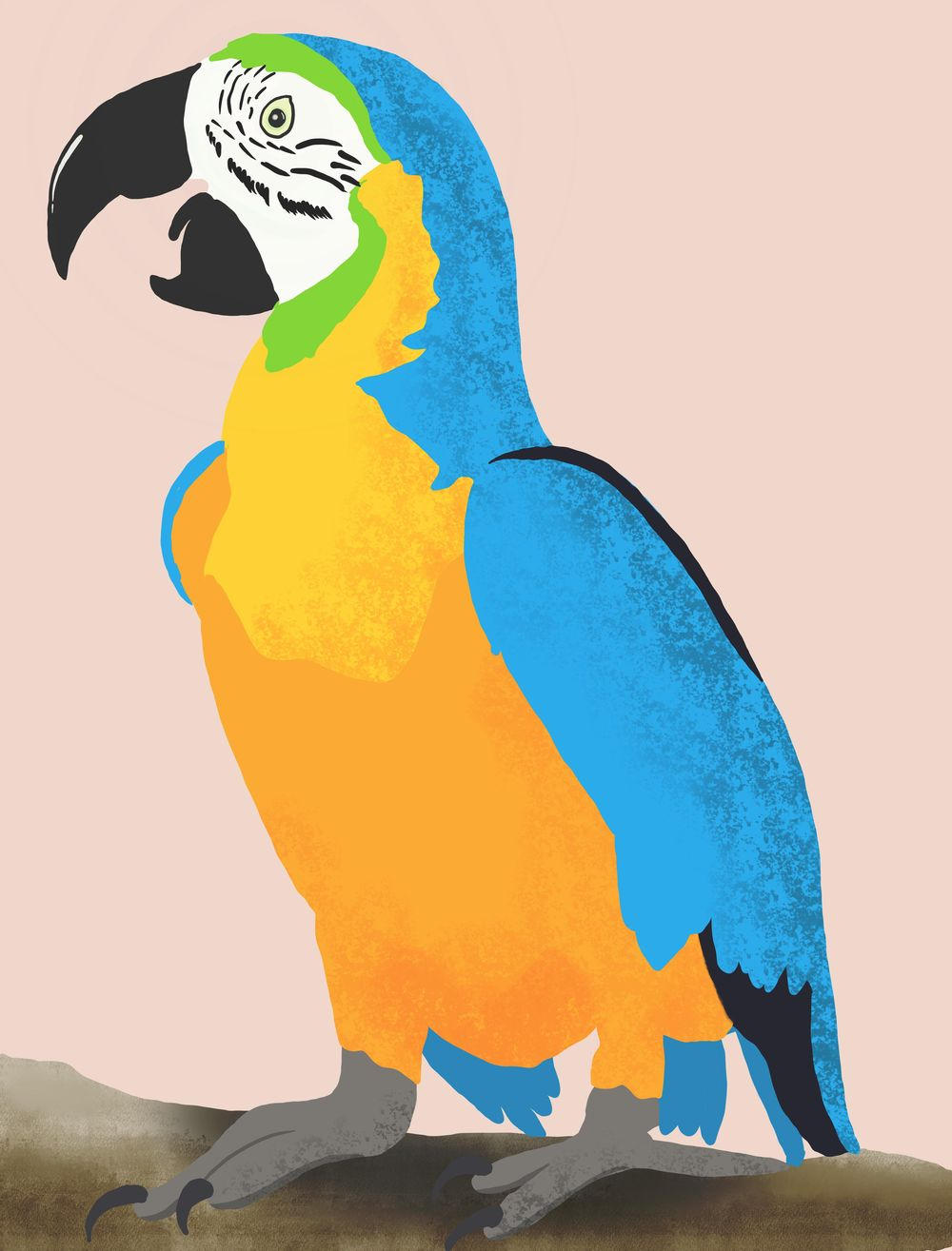 Parrot - image 1 - student project