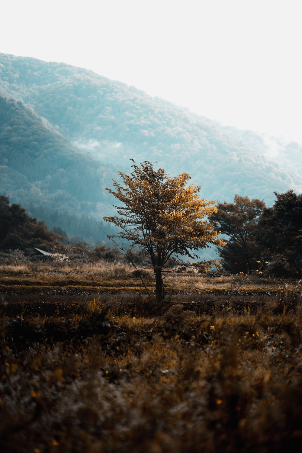 A simple tree - experimenting with editing styles! - image 3 - student project