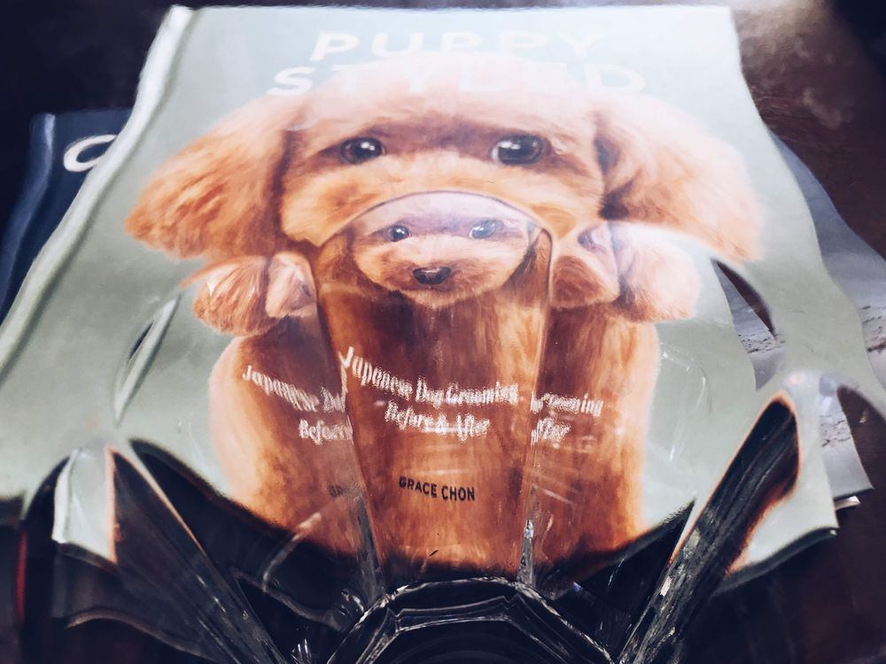 Puppy Styled shot through a drinking glass! - image 2 - student project