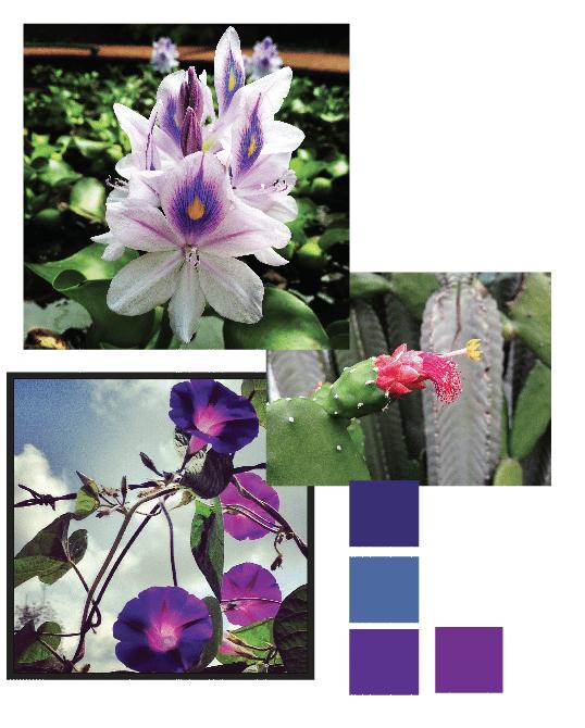 Botanik - image 3 - student project