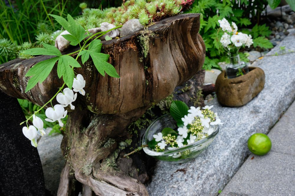 Pet Miniature Flower Arrangements - image 3 - student project
