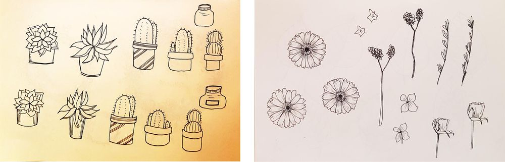 Botanical Line Drawings on Postcards - image 3 - student project