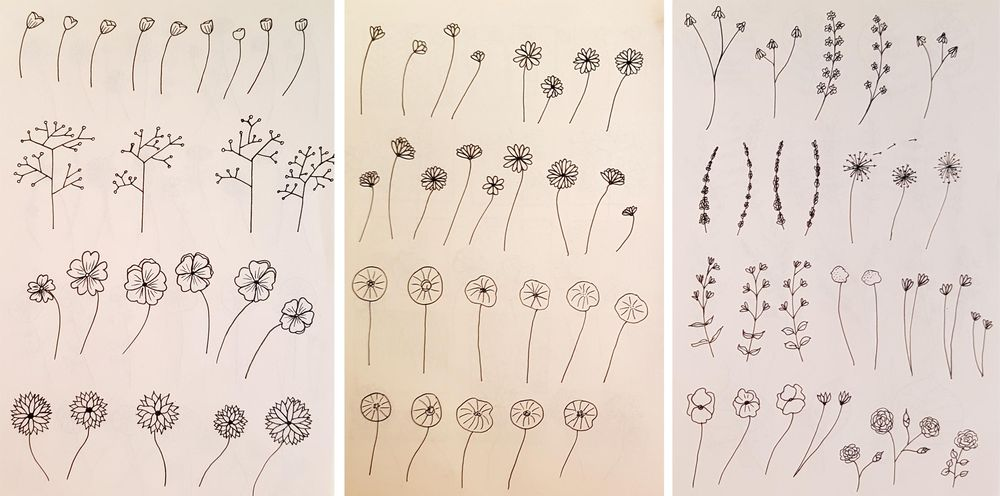 Botanical Line Drawings on Postcards - image 1 - student project
