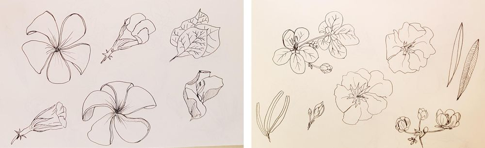 Botanical Line Drawings on Postcards - image 6 - student project