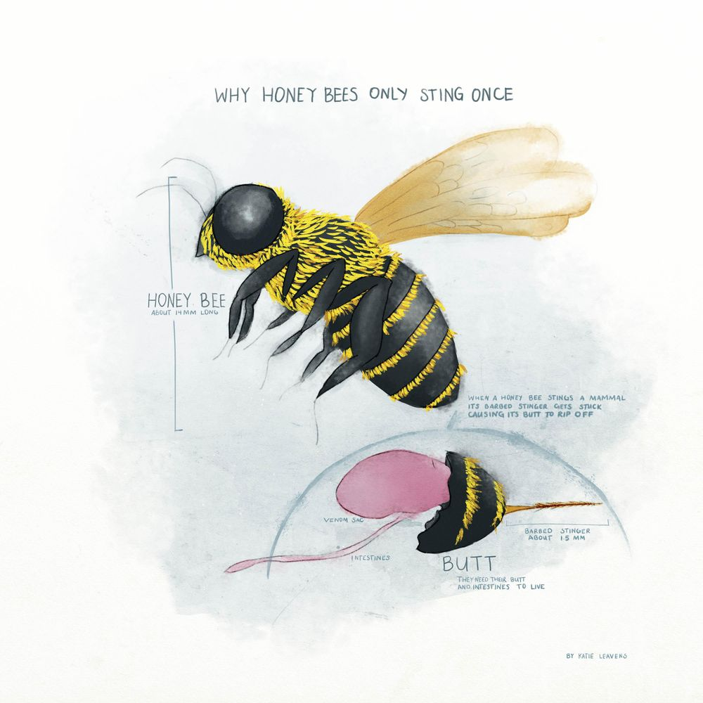 Honey bees only sting once - image 2 - student project