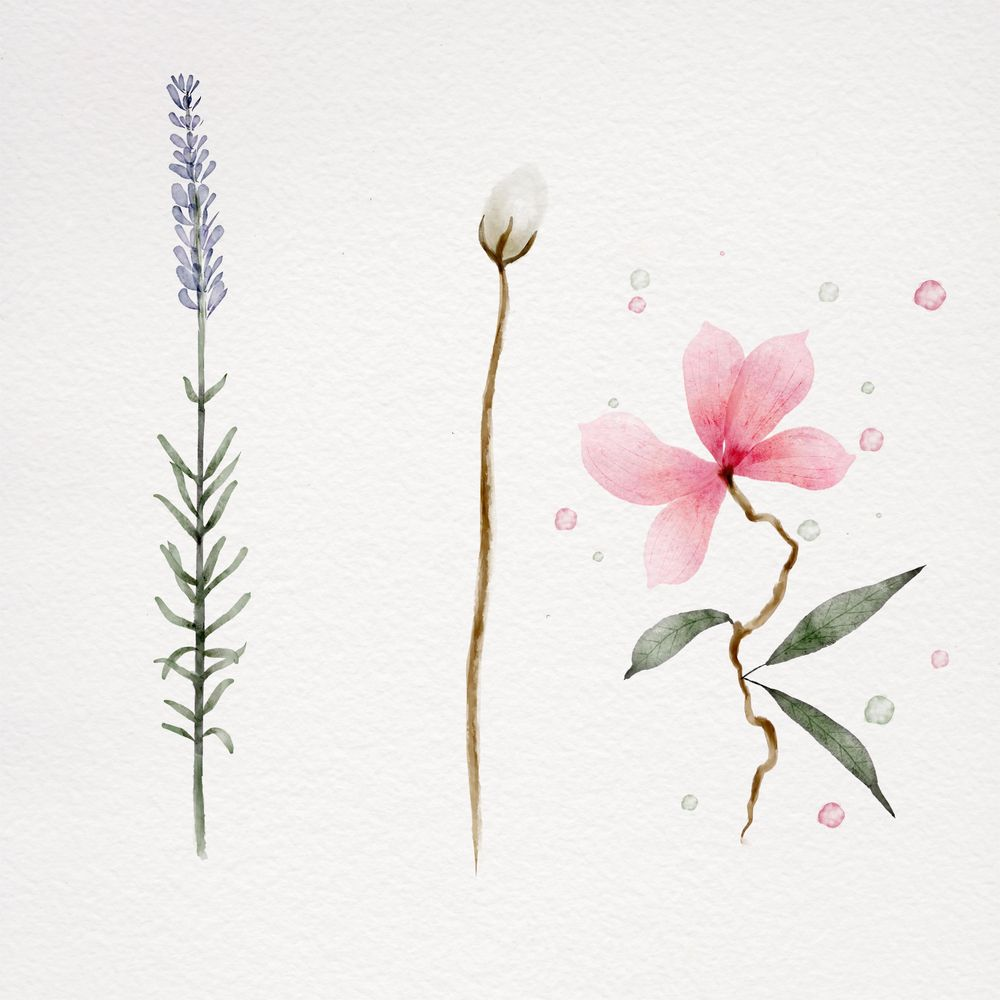 Botanical watercolor - image 4 - student project