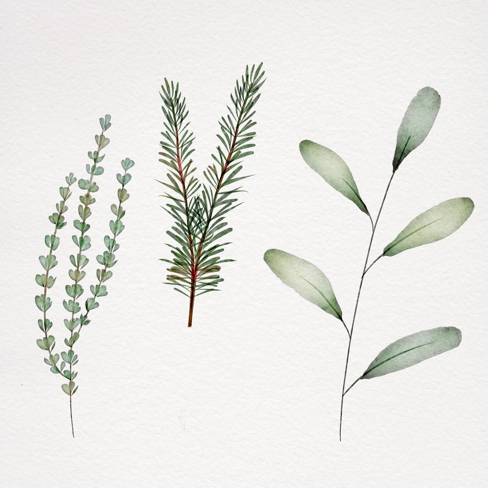Botanical watercolor - image 5 - student project