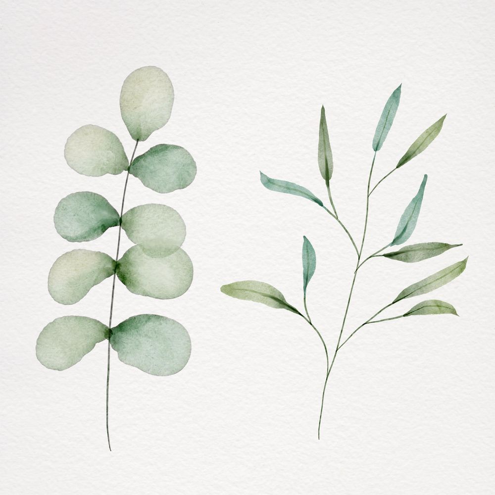 Botanical watercolor - image 6 - student project