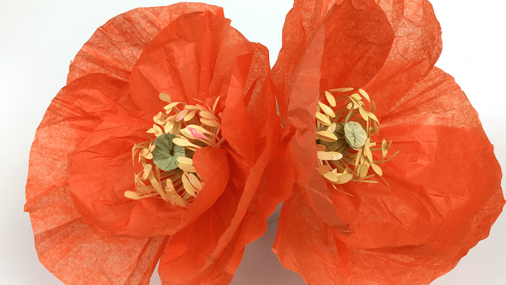 My Crepe Paper & Tissue Paper Poppies - image 2 - student project