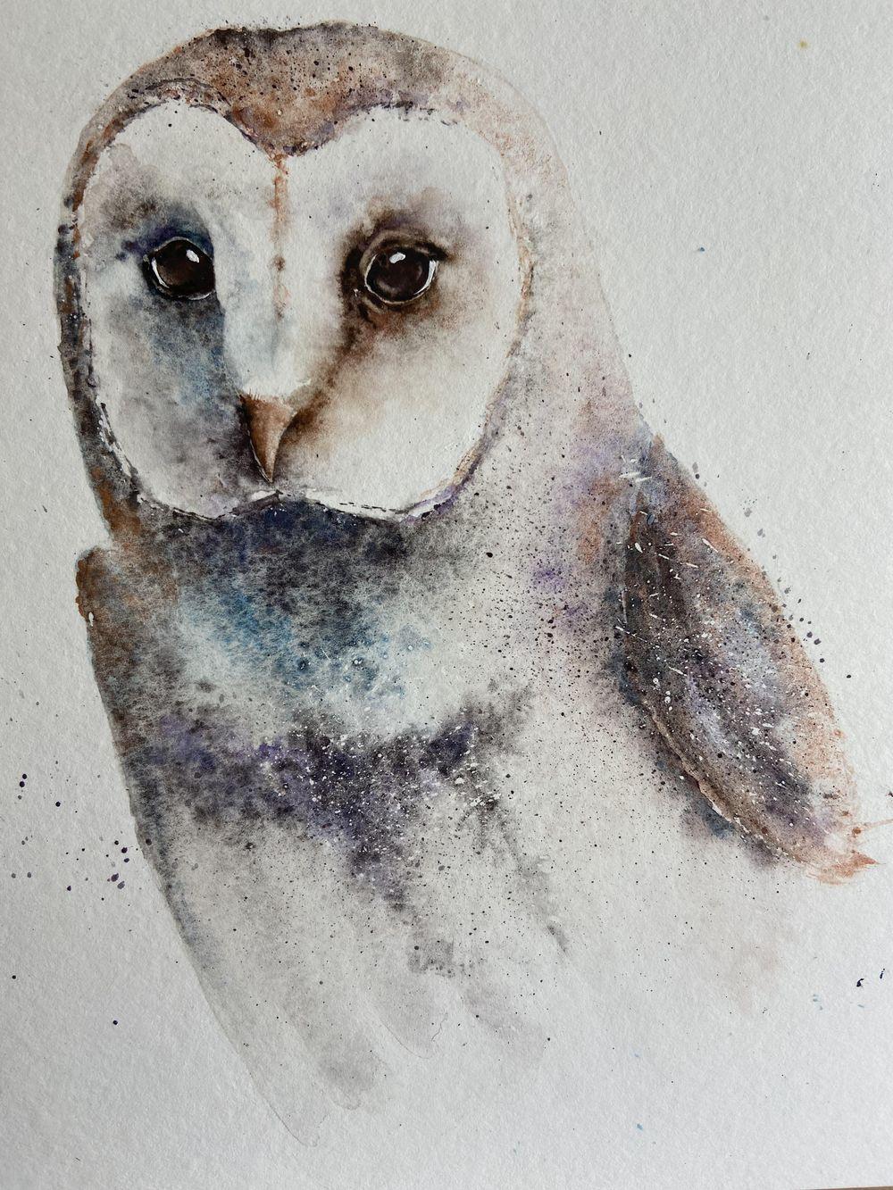 Beautiful barn owl - image 1 - student project