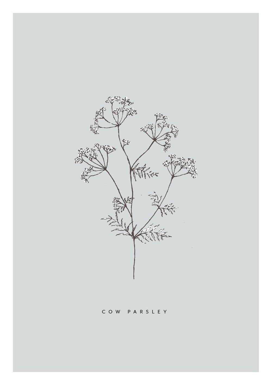 Pencil sketch botanicals - image 6 - student project