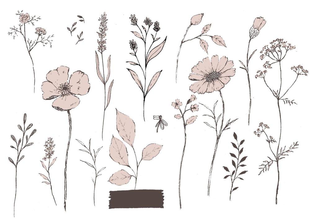 Pencil sketch botanicals - image 5 - student project
