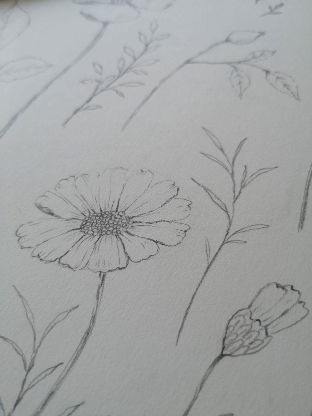 Pencil sketch botanicals - image 2 - student project