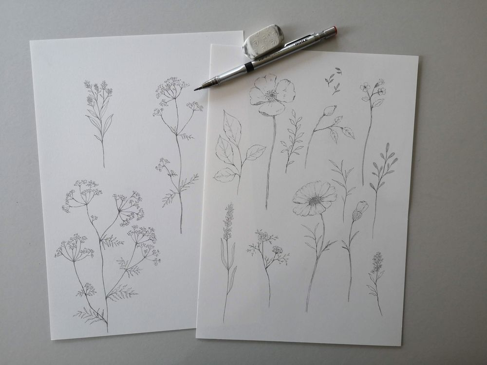 Pencil sketch botanicals - image 1 - student project