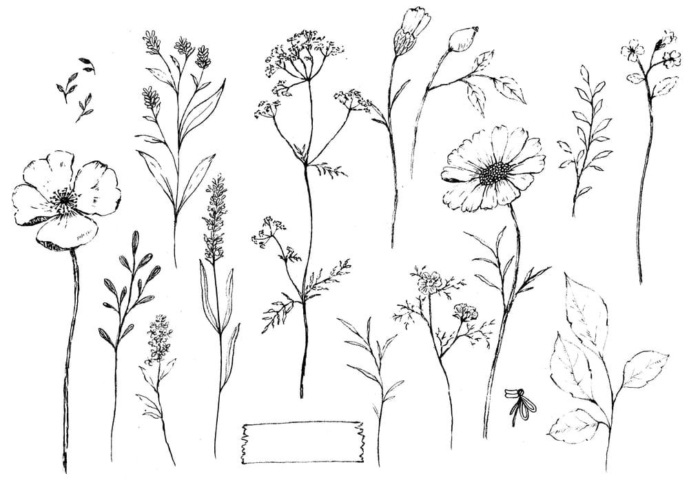 Pencil sketch botanicals - image 3 - student project