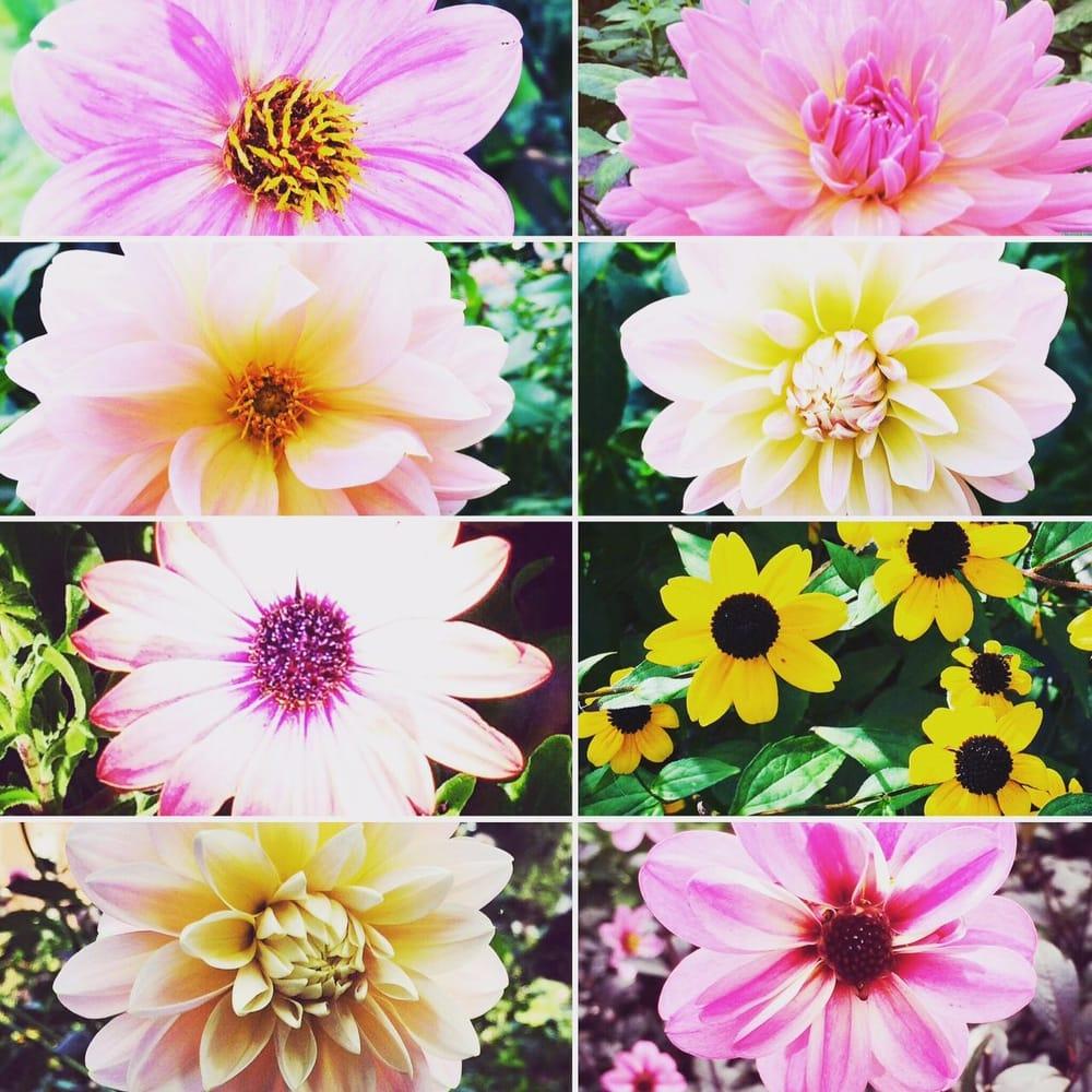 Secret Garden - image 1 - student project