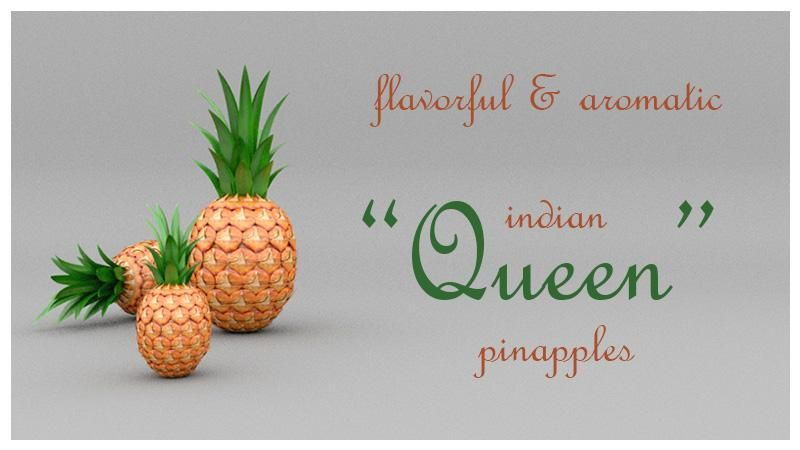 «Queen» Indian Pineapple - image 3 - student project