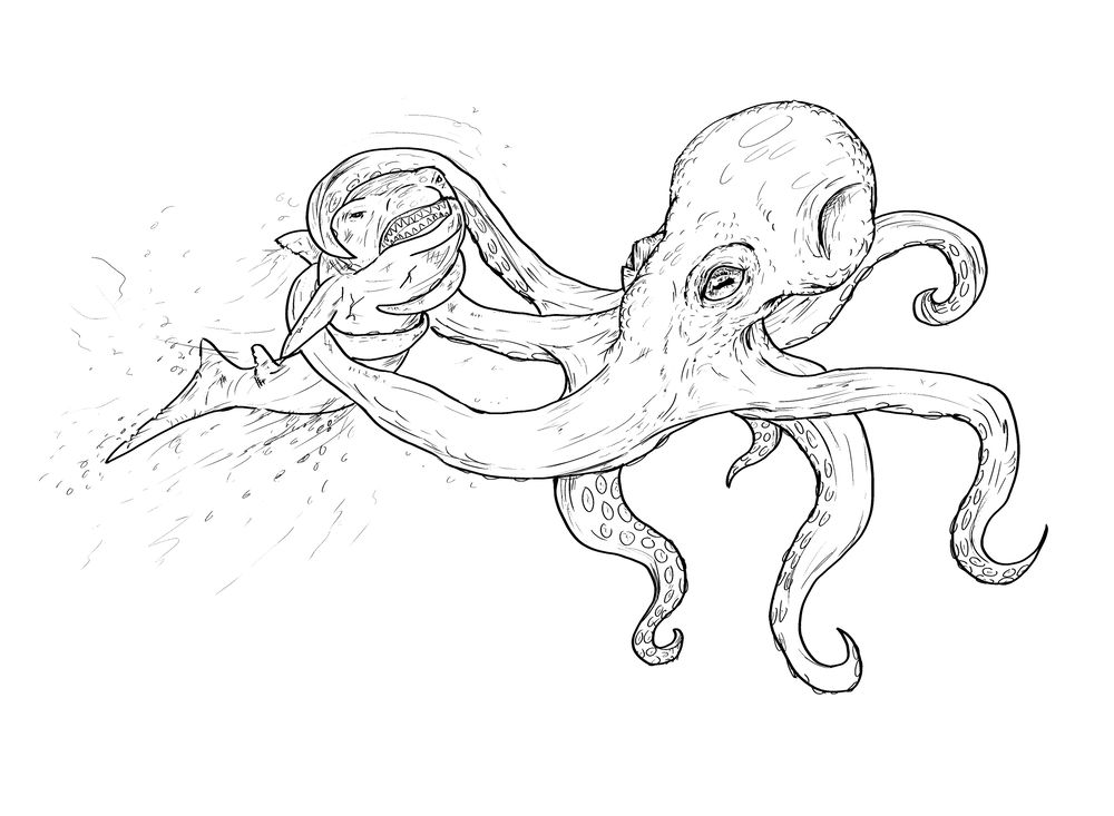 Octopus Attacks Shark - image 2 - student project