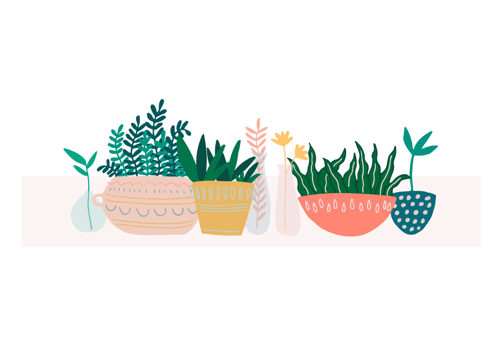 Indoor Plants - From Sketch to Vector - image 1 - student project