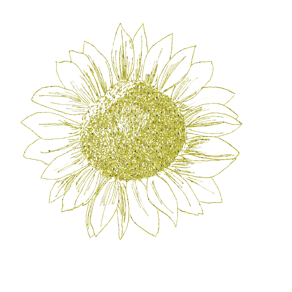 Sunflower drawing - image 1 - student project