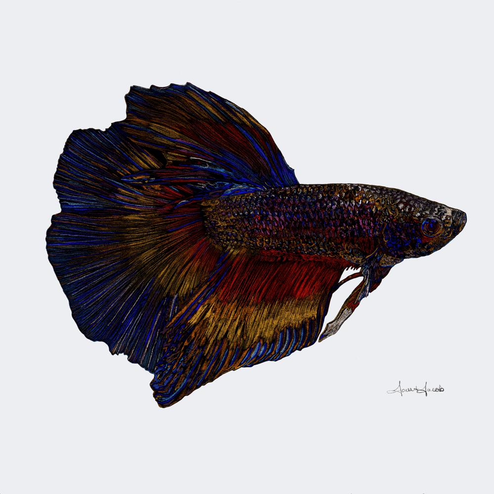 Betta Fighting Fish Head - image 1 - student project