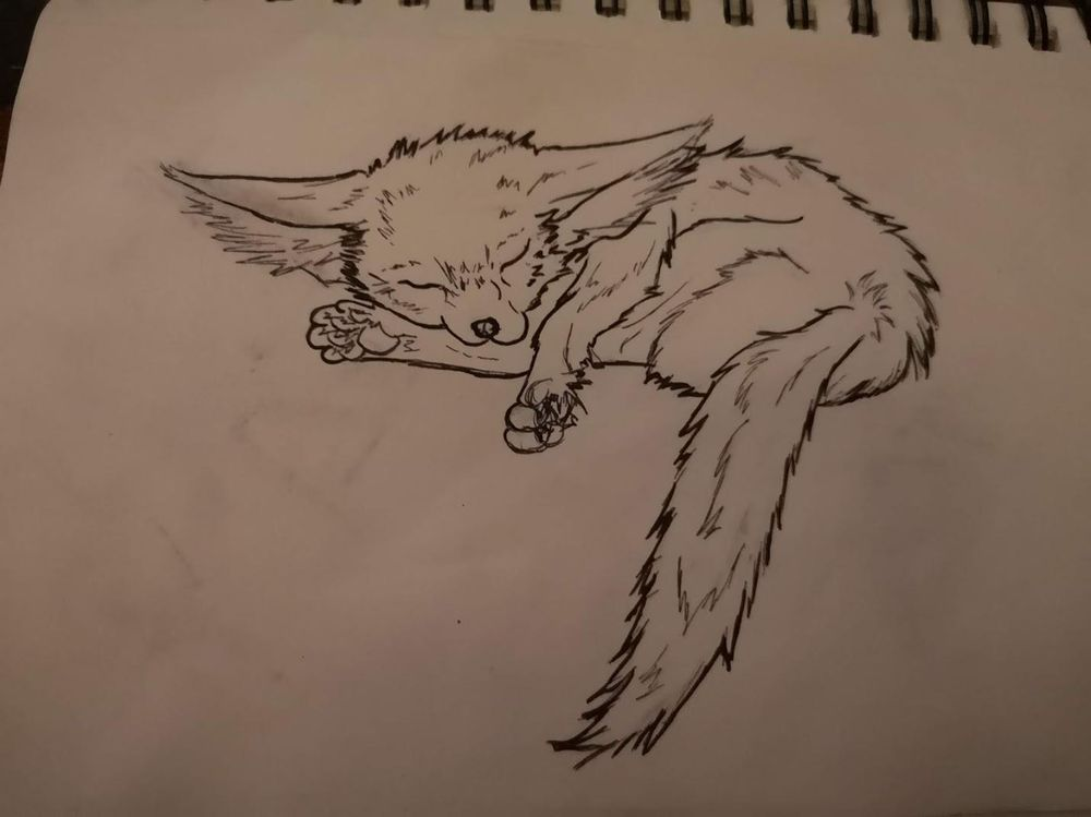 Sleeping Fennec Fox - image 1 - student project