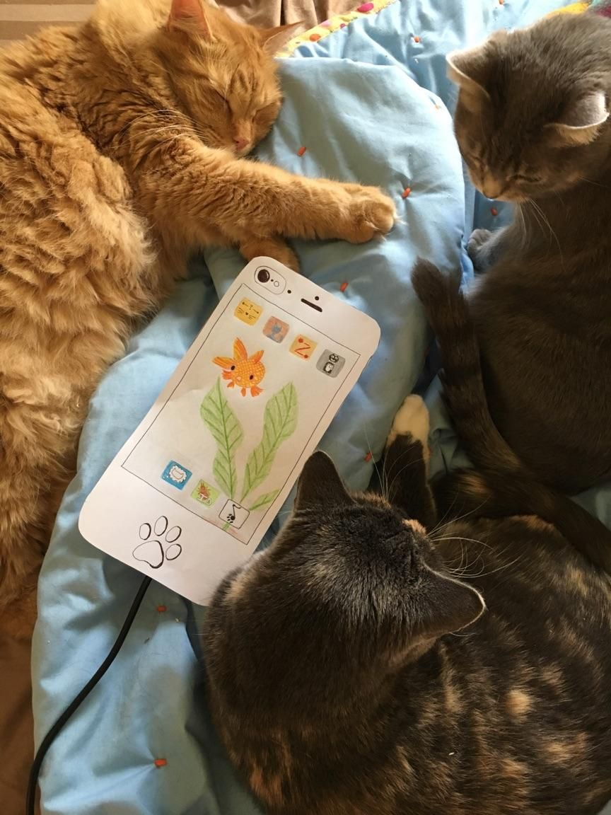 cat phone - image 1 - student project