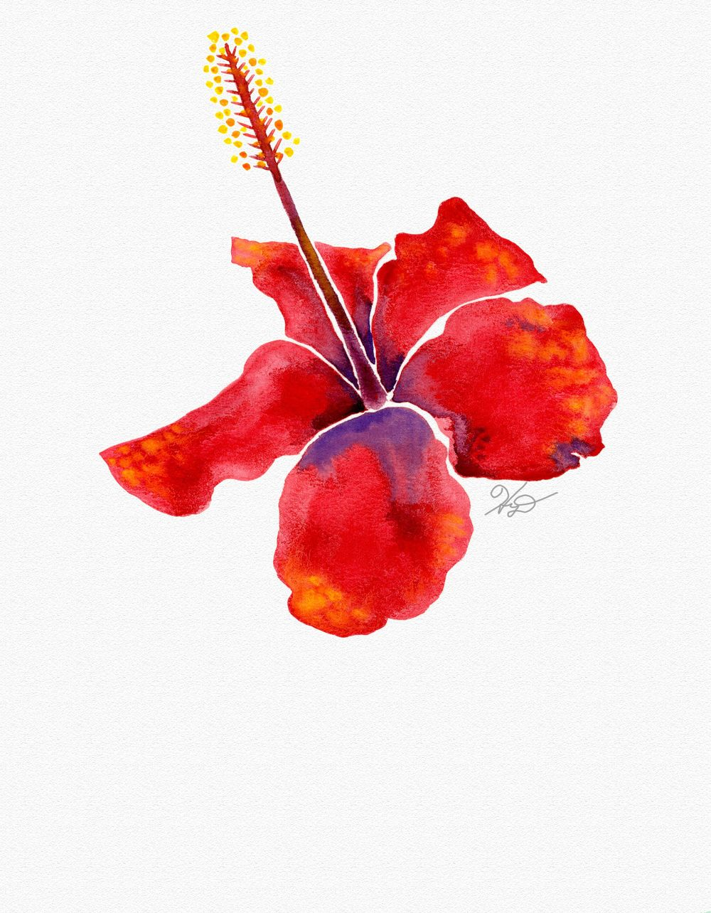 HD's Botanicals - image 1 - student project
