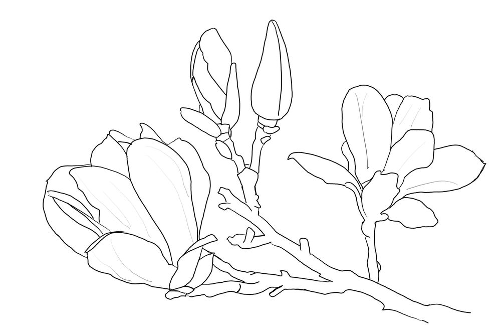 Magnolias - image 1 - student project