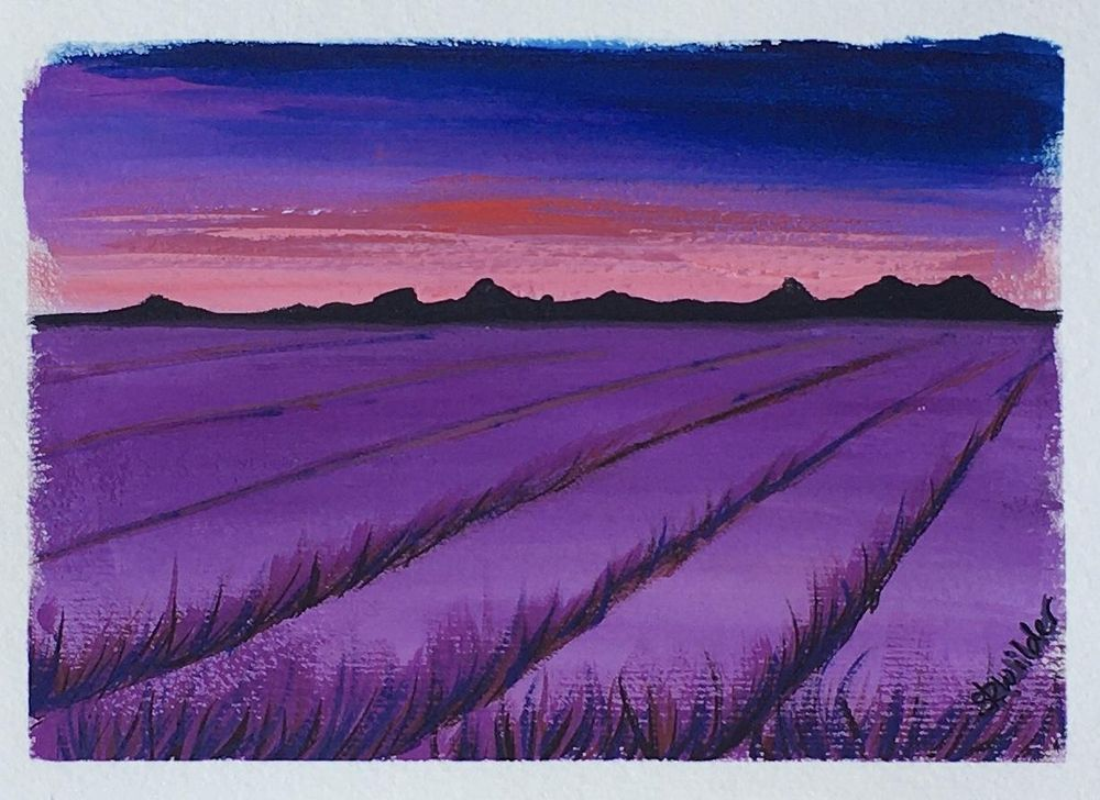 Lavender field - image 3 - student project
