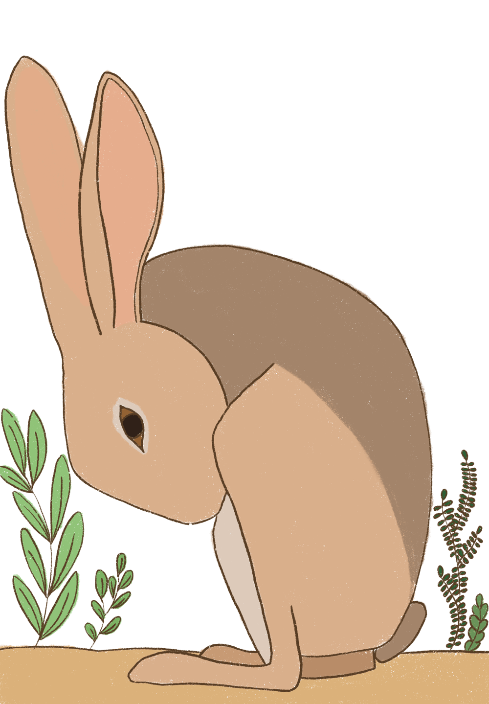 Hare - image 3 - student project