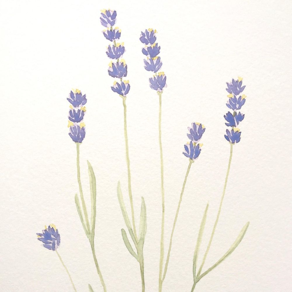Lavender Watercolor Paintings - image 2 - student project