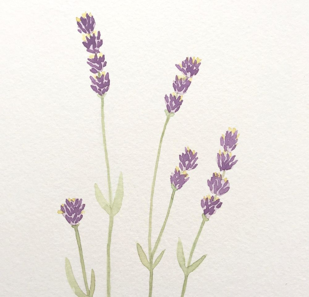 Lavender Watercolor Paintings - image 1 - student project