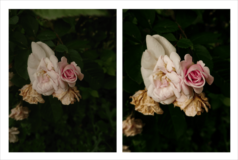 Photo editing -- Flowers - image 1 - student project