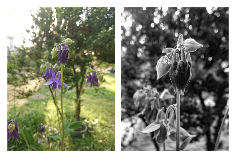 Photo editing -- Flowers - image 2 - student project