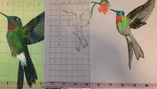 Drawings by Lin Prideaux - image 1 - student project
