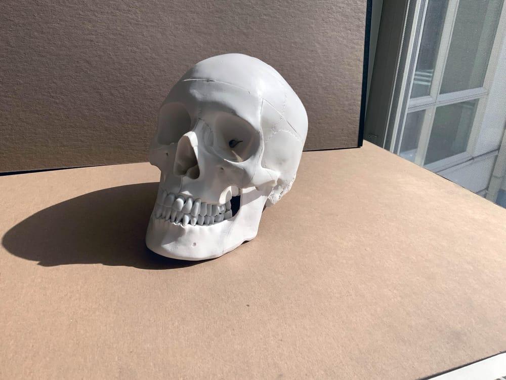 4 Skulls - image 1 - student project