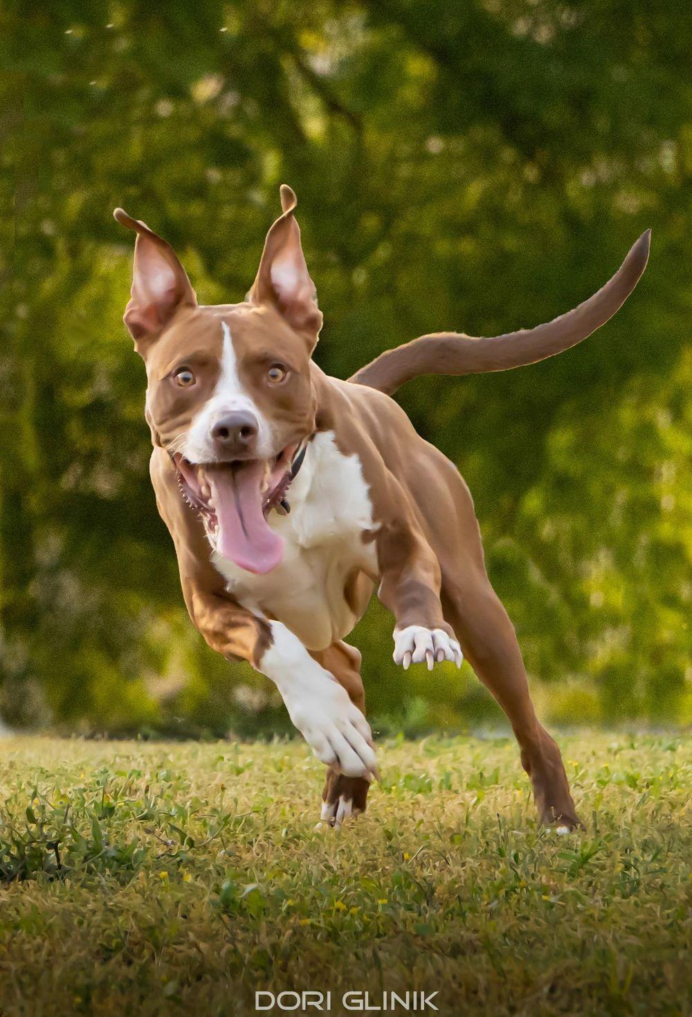 Dog Portrait - image 1 - student project