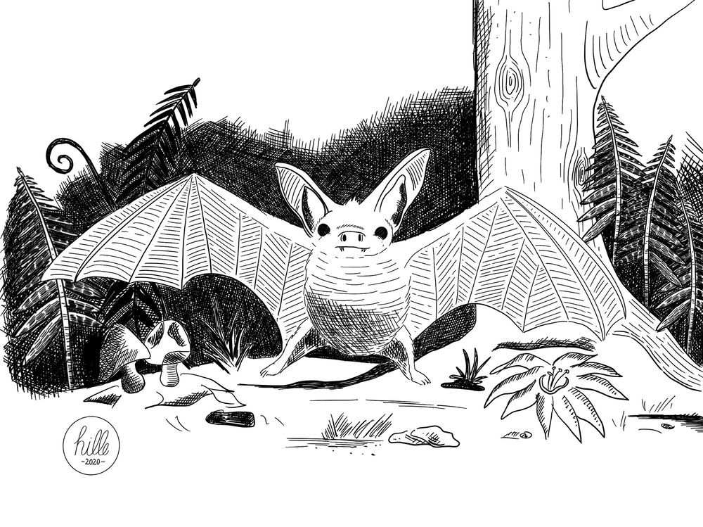 Bat and cat - image 1 - student project