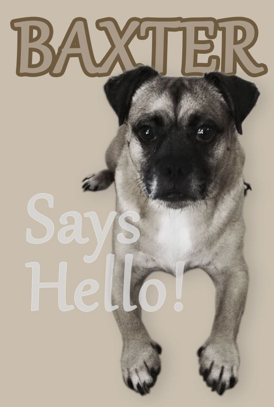 Dog Greeting - image 1 - student project