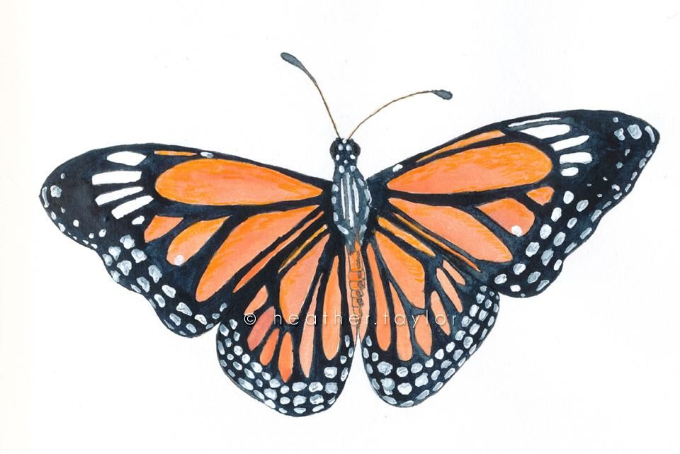 Monarch - image 3 - student project