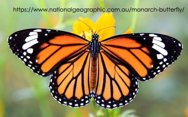 Monarch - image 1 - student project