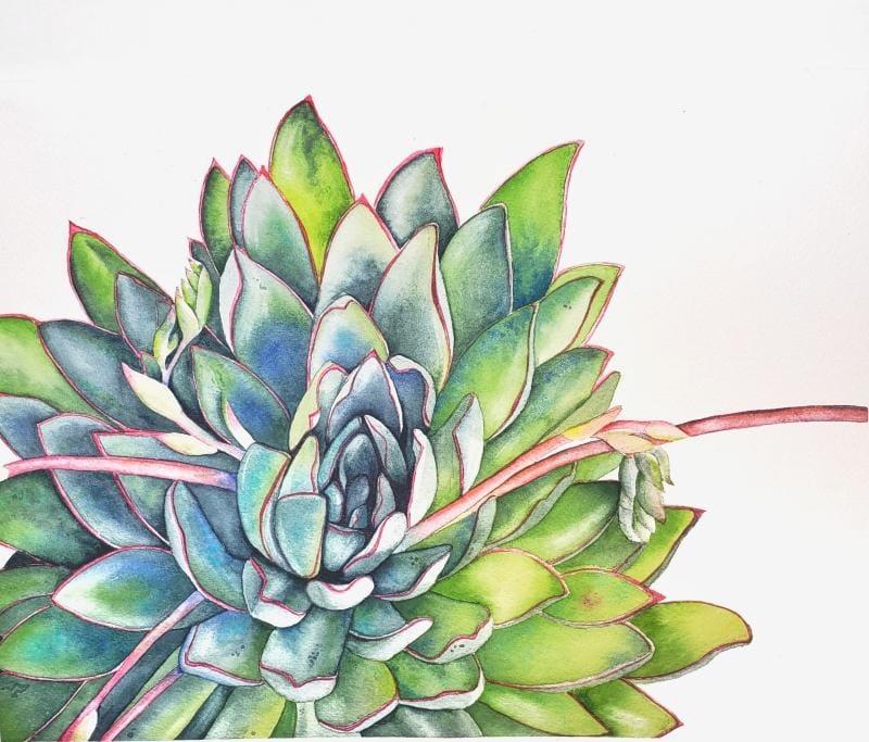 Louise De Masi's Watercolor Succulent Class - image 1 - student project