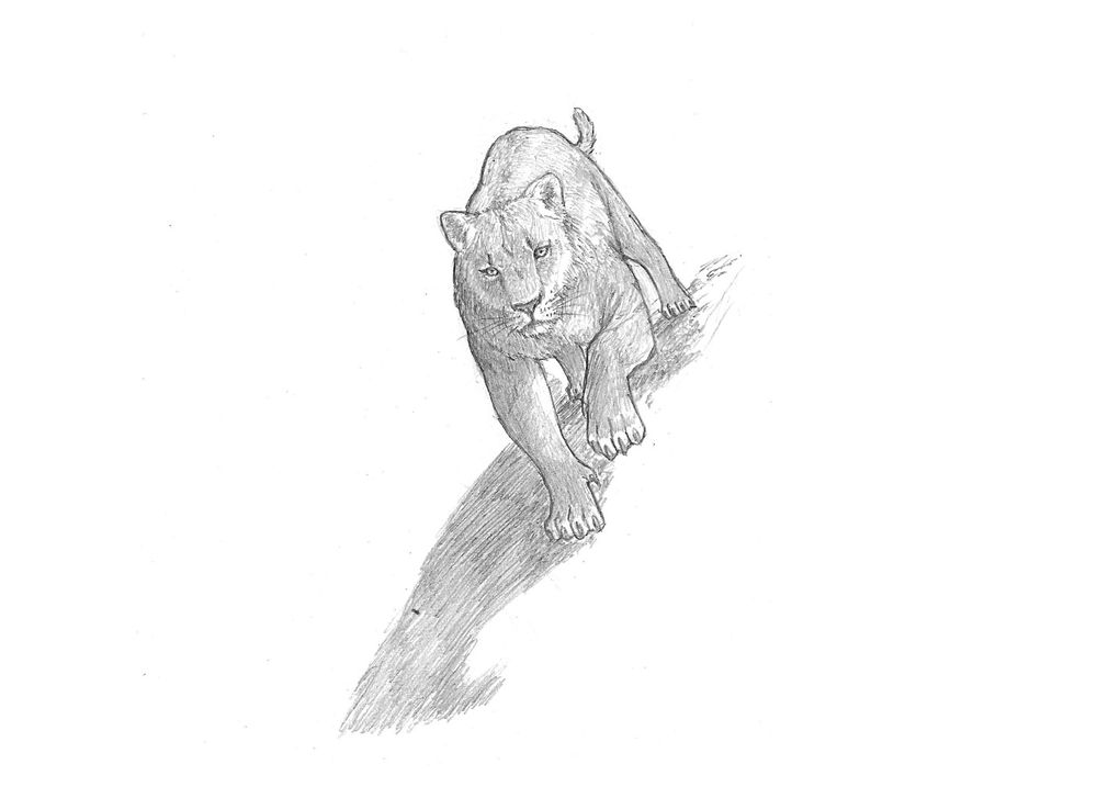 Project: Animal Drawing - image 3 - student project
