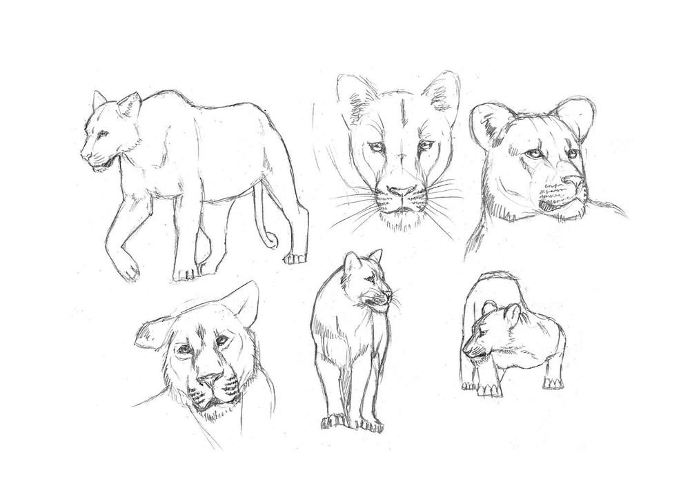 Project: Animal Drawing - image 2 - student project