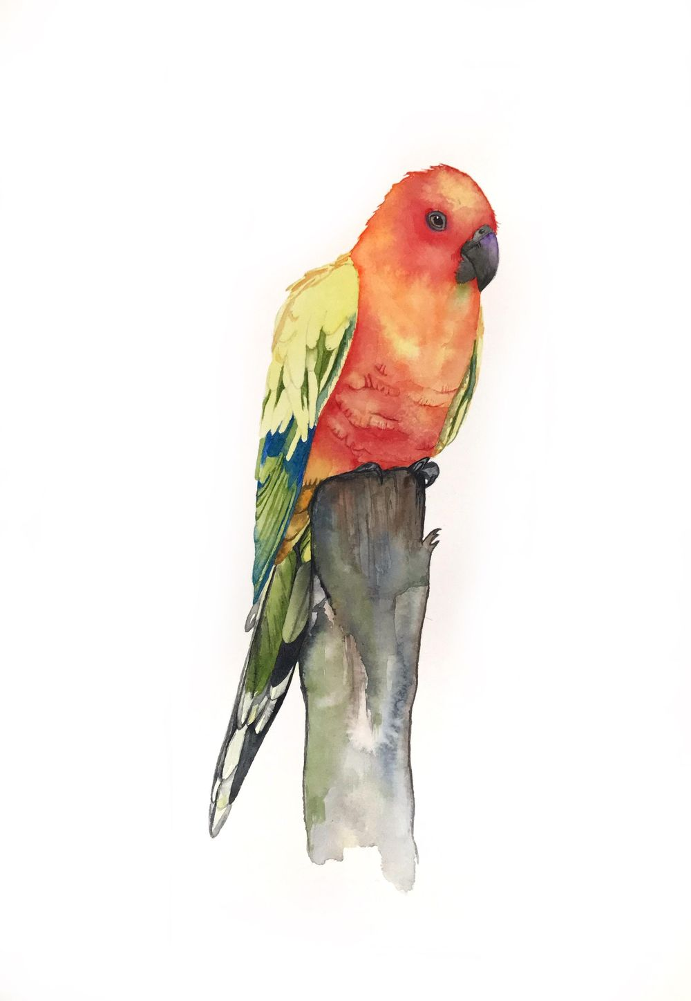 Sun Conure by Tipicactus - image 1 - student project