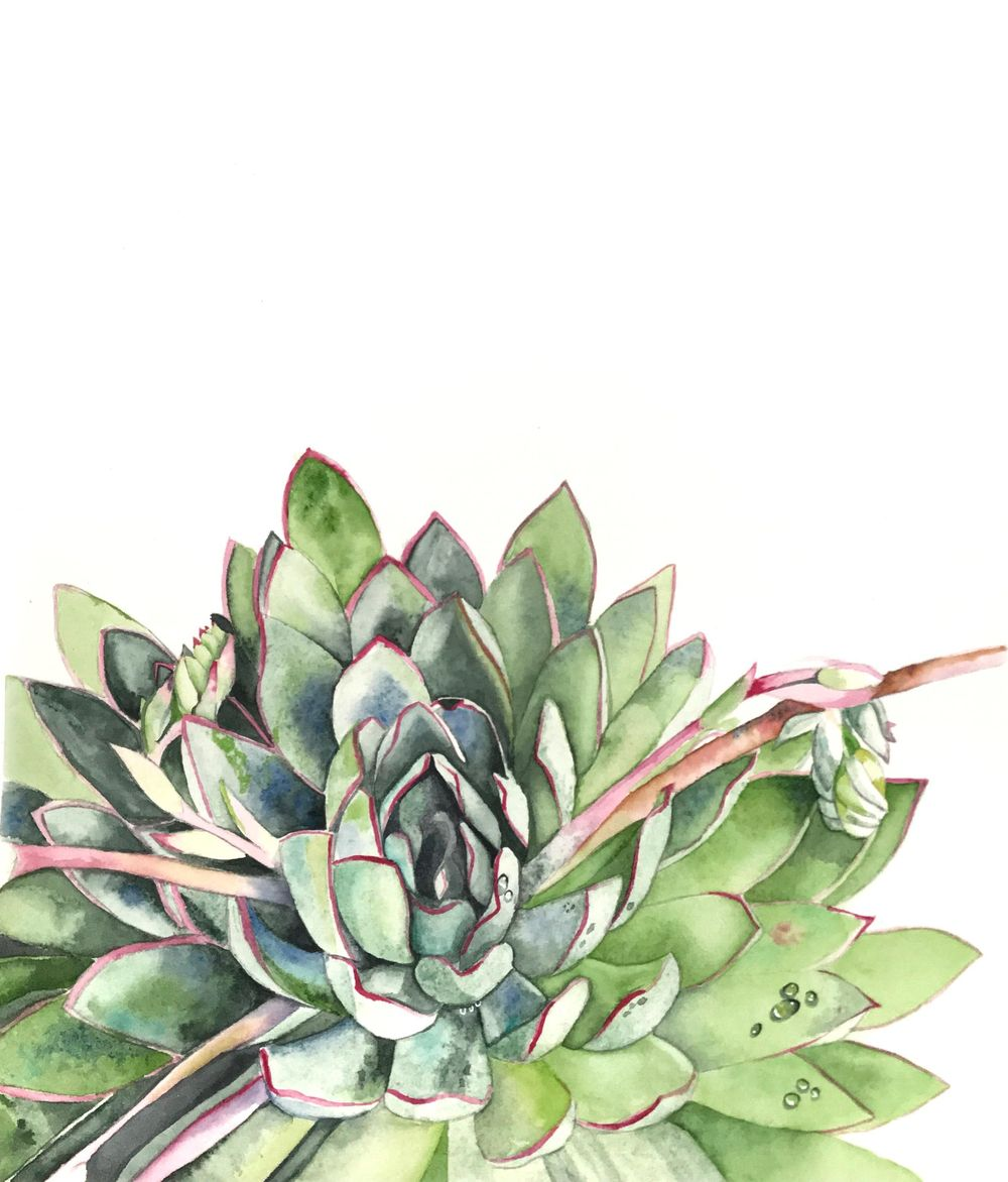 Succulent by Tipicactus - image 1 - student project