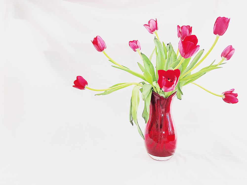 Red Tulips - image 3 - student project